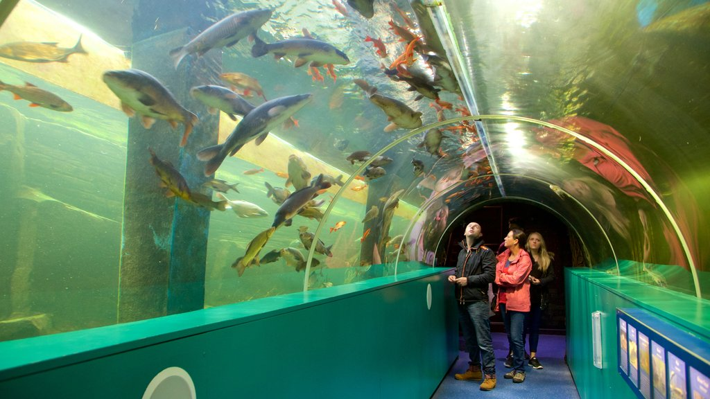Lakeside showing marine life and interior views as well as a small group of people