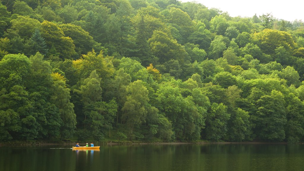 Grasmere showing kayaking or canoeing and forest scenes
