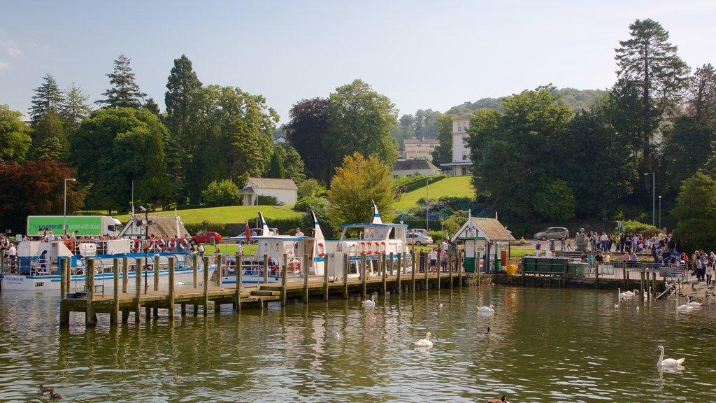 Bowness-on-Windermere showing bird life, general coastal views and boating
