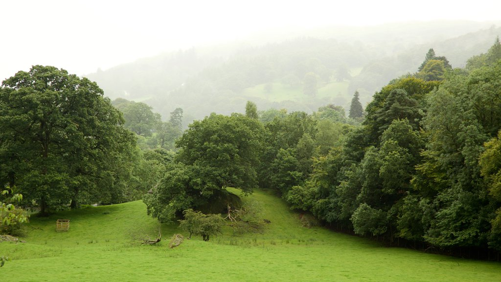Lake District National Park which includes mist or fog and a park