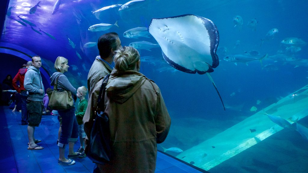 National Marine Aquarium featuring interior views and marine life as well as a small group of people