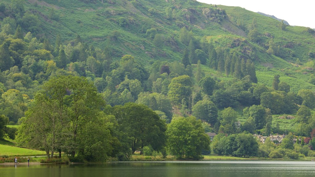 Grasmere showing forests and a lake or waterhole