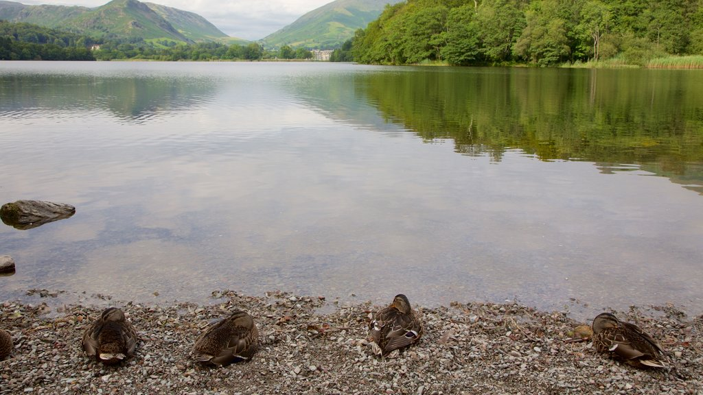 Grasmere featuring bird life and a lake or waterhole