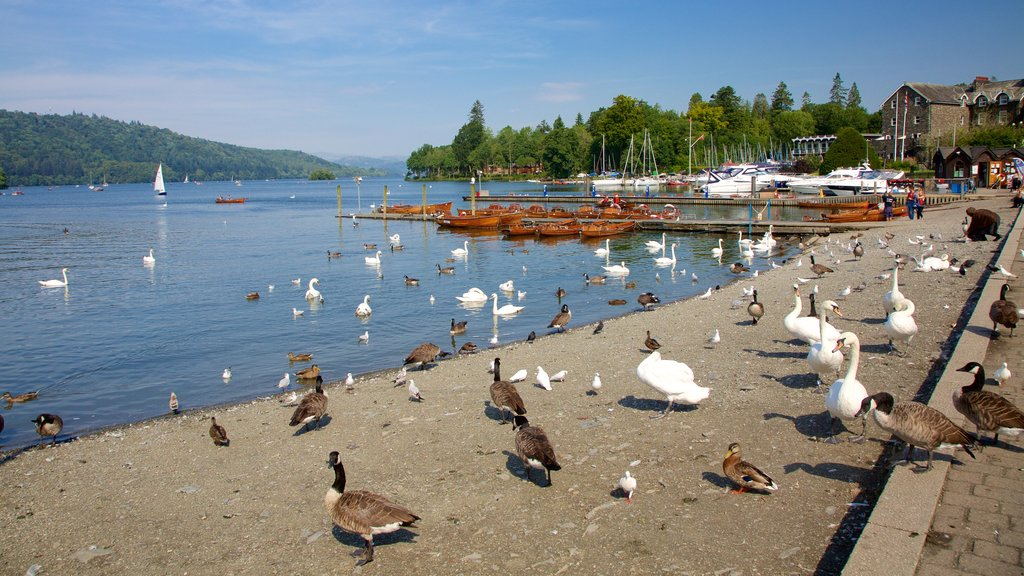 Bowness-on-Windermere showing boating, a marina and a coastal town