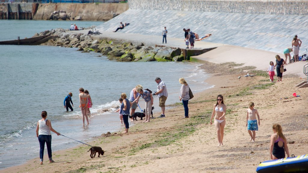 Exmouth showing cuddly or friendly animals, a beach and swimming