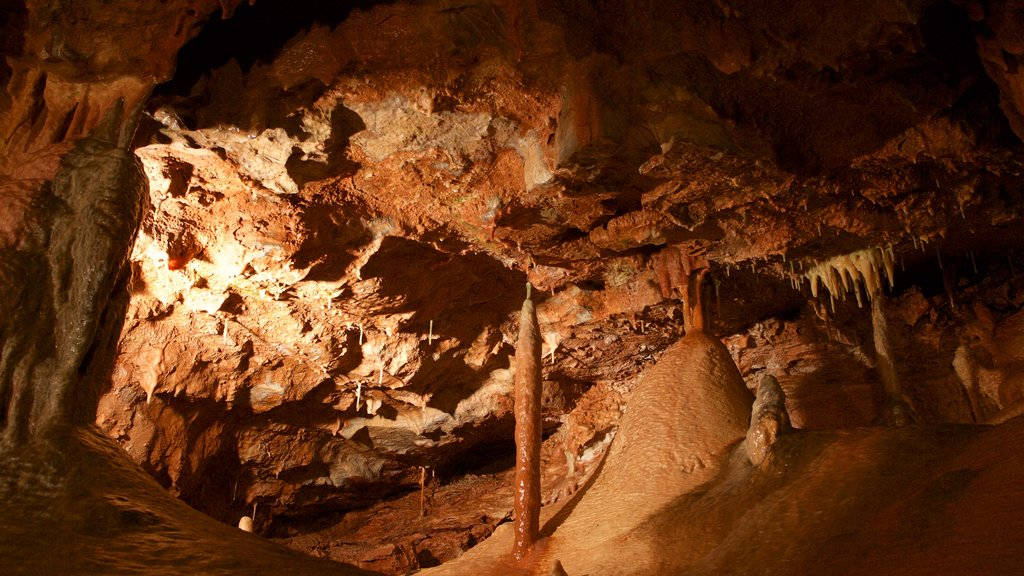 Kents Cavern Prehistoric Caves which includes caves and interior views