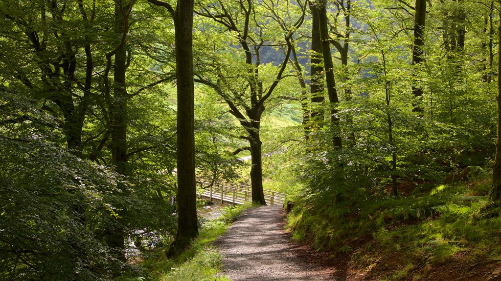 Lake District National Park showing a bridge and forest scenes