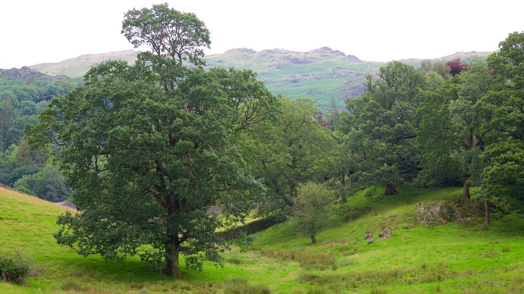 Lake District National Park featuring tranquil scenes