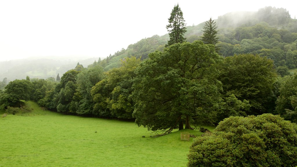 Lake District National Park featuring tranquil scenes and mist or fog