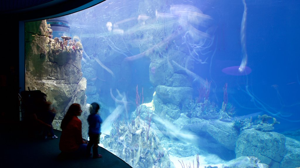 National Marine Aquarium which includes interior views, coral and marine life