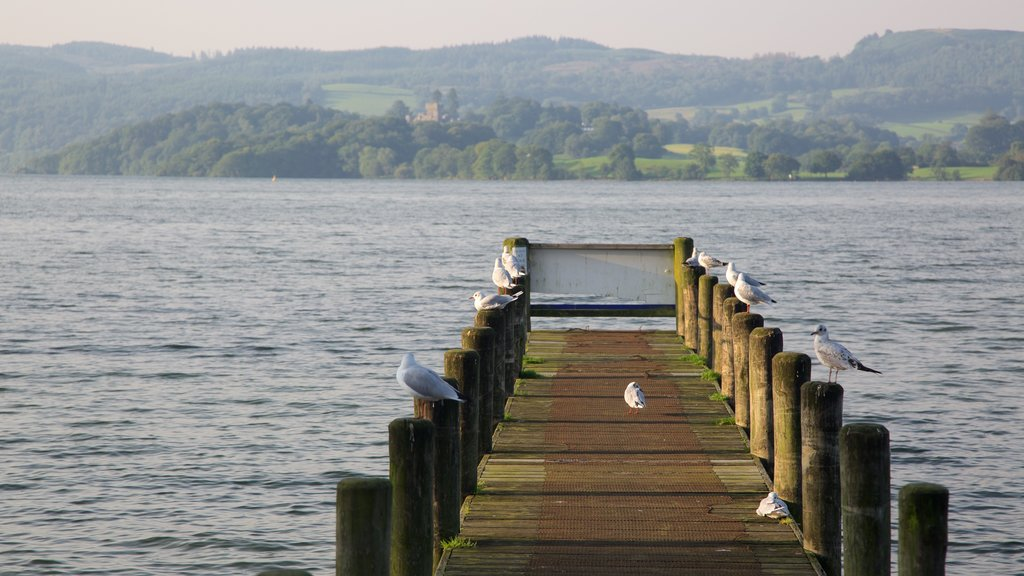 Ambleside showing a lake or waterhole and bird life