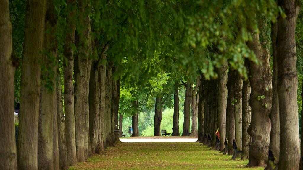 Echternach which includes a park