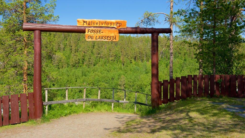Cascada de Maalselvfossen que incluye señalización y escenas forestales