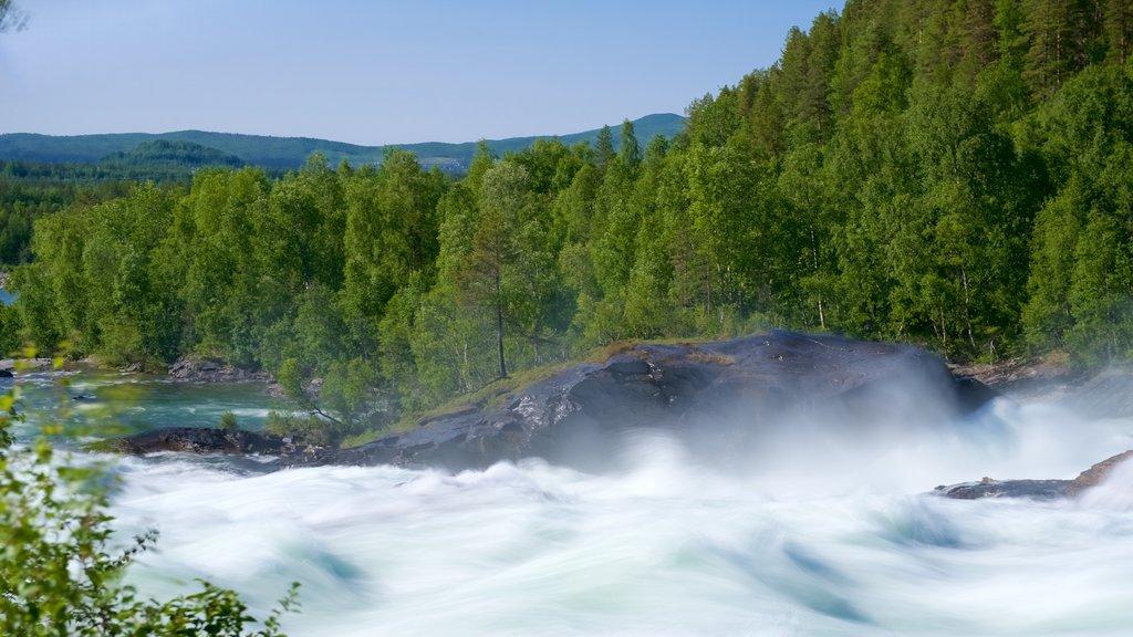 Cascada de Maalselvfossen ofreciendo escenas forestales y rápidos