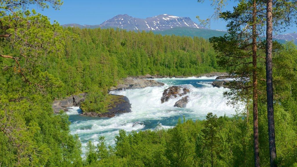 Cascada de Maalselvfossen mostrando bosques y rápidos