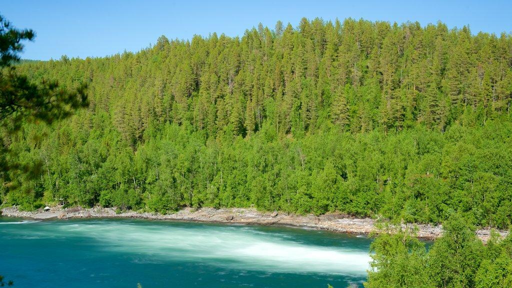 Cascada de Maalselvfossen ofreciendo escenas forestales