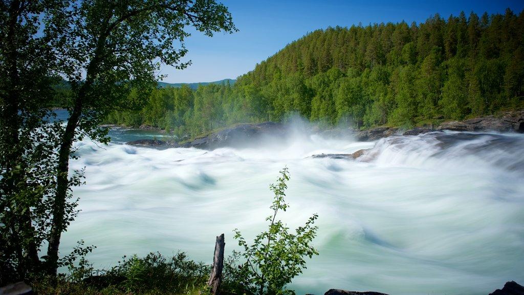 Cascada de Maalselvfossen que incluye bosques y rápidos