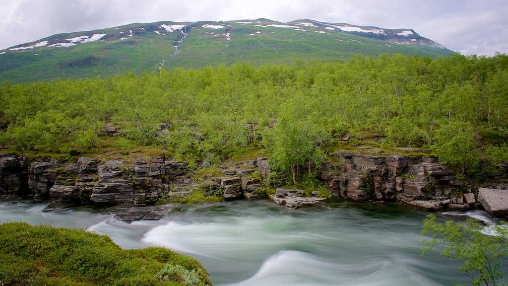 Abisko National Park showing rapids and forest scenes