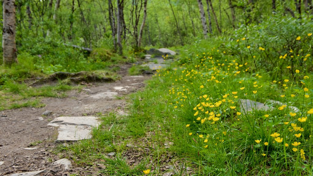 Abisko National Park which includes forest scenes and wildflowers
