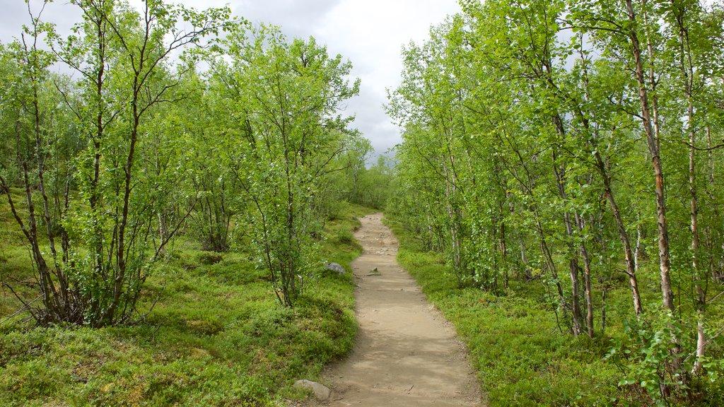 Kebnekaise ofreciendo escenas forestales