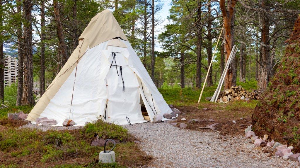 Parque Nacional de Stora Sjofallet mostrando campamento