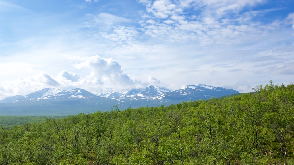 Abisko which includes forests