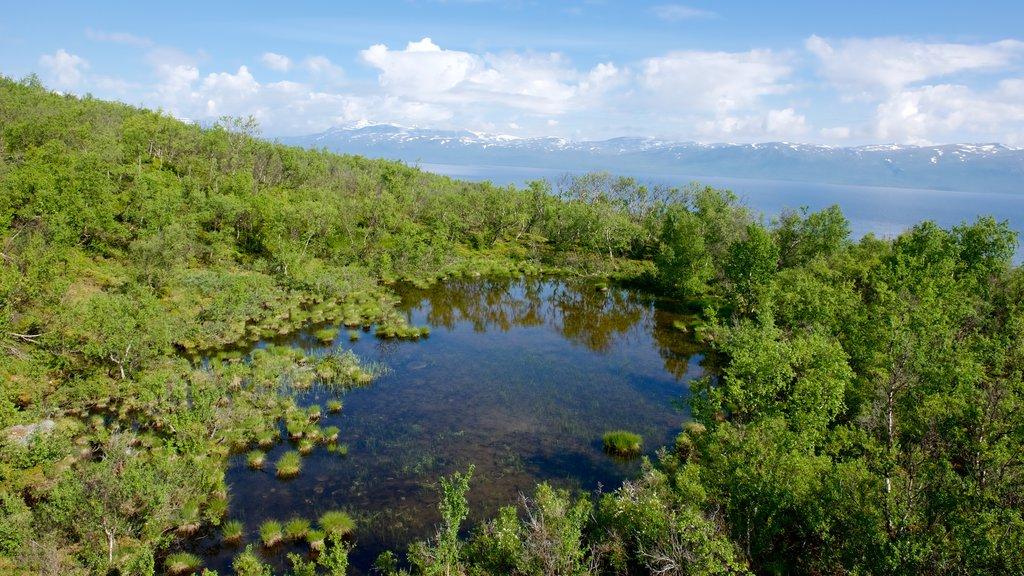 Abisko que incluye escenas forestales y un lago o abrevadero
