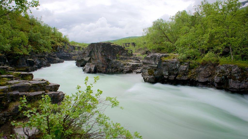 Parque Nacional de Abisko ofreciendo escenas forestales y un río o arroyo