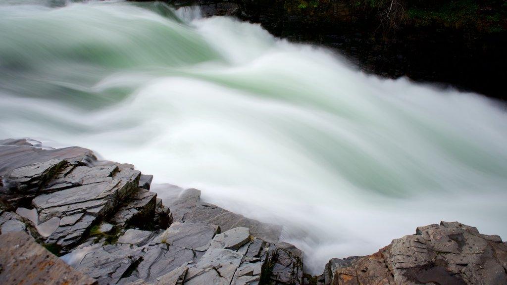 Abisko National Park featuring rapids