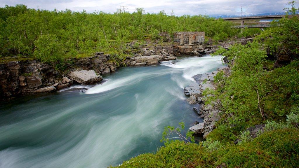 Parque Nacional de Abisko que incluye escenas forestales y rápidos
