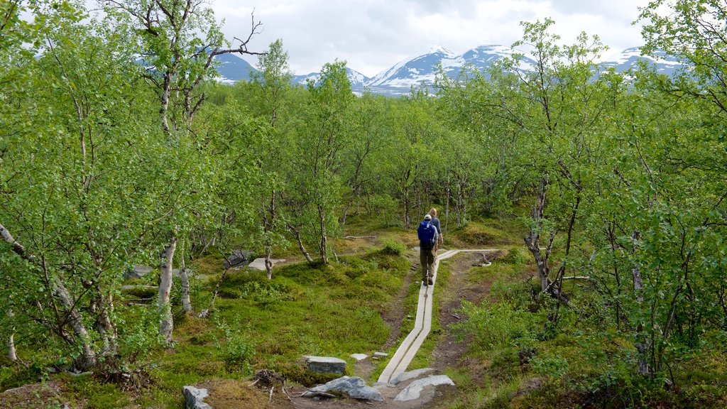 Abisko National Park featuring hiking or walking and forests