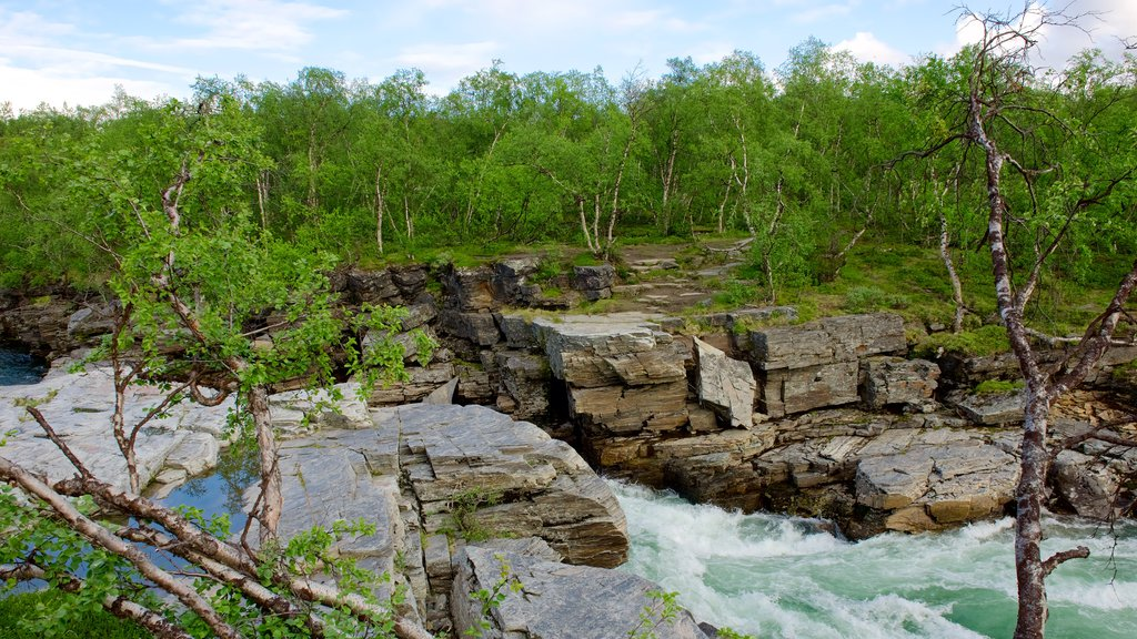 Abisko National Park which includes forest scenes and rapids