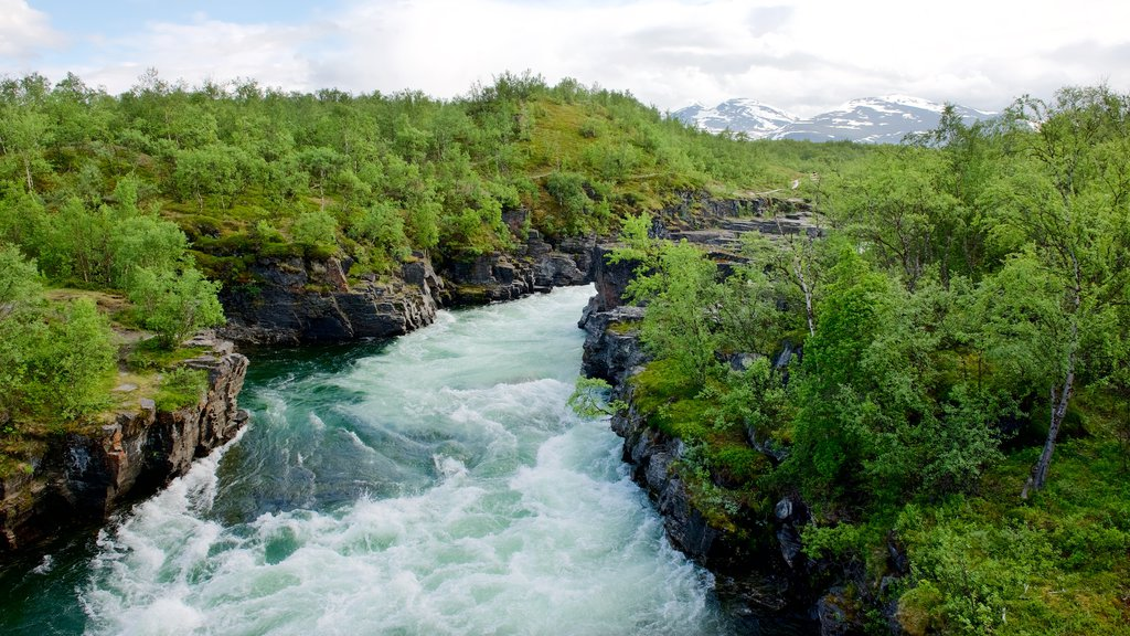 Abisko National Park which includes forests and rapids