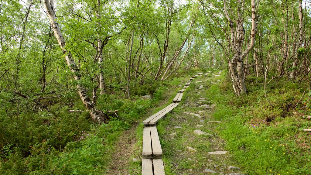 Abisko National Park which includes forest scenes