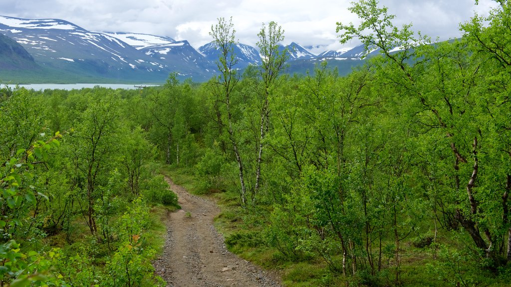 Kebnekaise featuring forest scenes