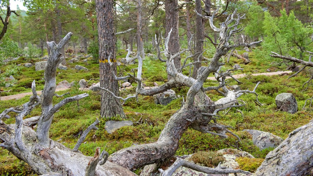 Stora Sjofallet National Park showing forests