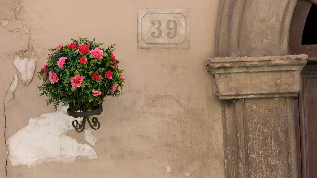 Tarquinia showing flowers