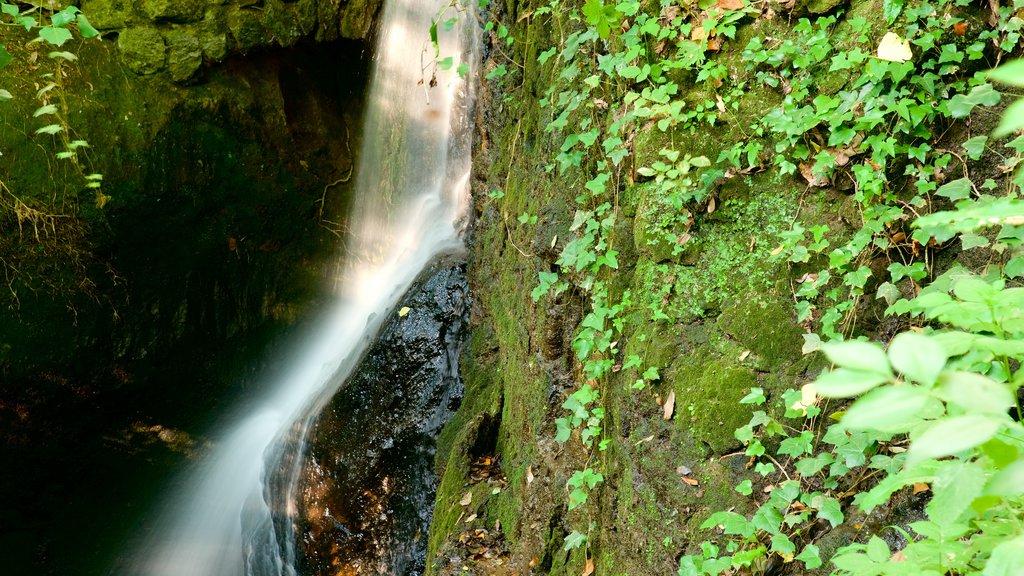 Parco dei Mostri featuring a waterfall