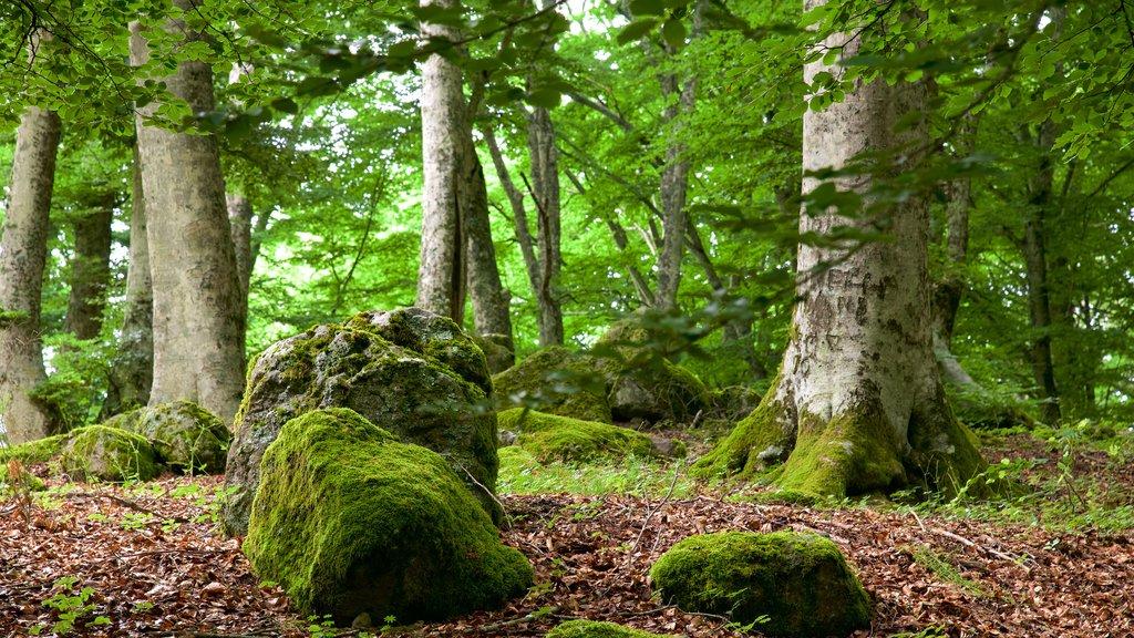Soriano nel Cimino que incluye escenas forestales