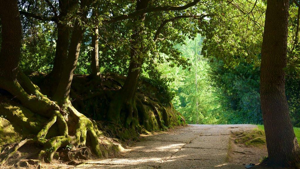 Parco dei Mostri ofreciendo bosques
