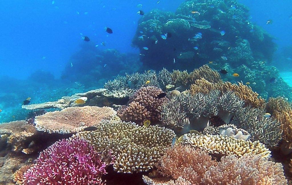 Korallenriff am Great Barrier Reef