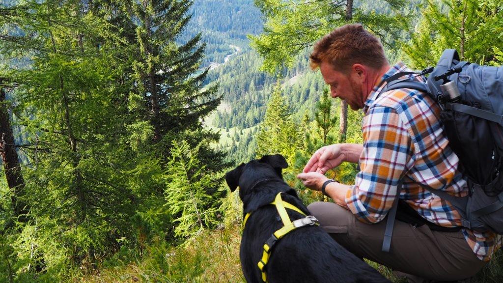 Interessierte Wanderer beim Preiselbeer Sammeln im Wald