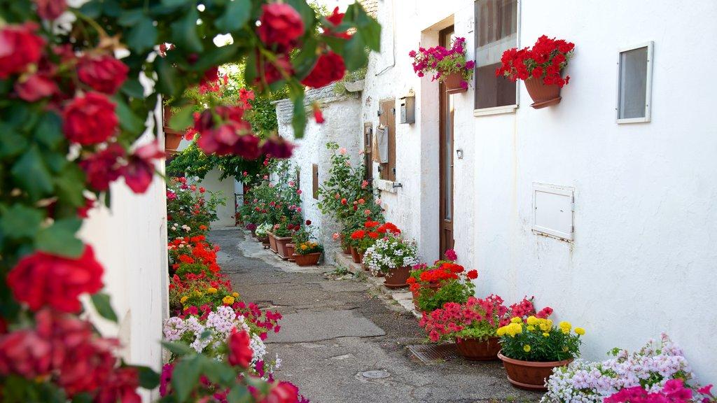Alberobello showing flowers