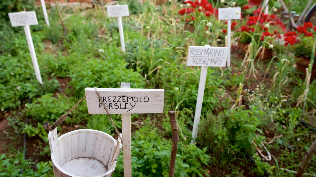 Alberobello showing signage and farmland