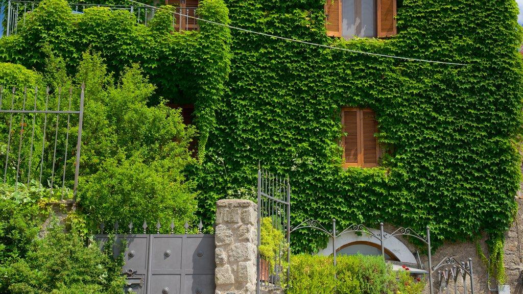 Vitorchiano showing a garden