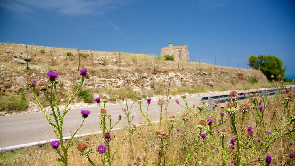 Gargano Peninsula which includes flowers
