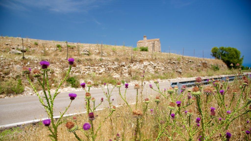 Península Gargano ofreciendo flores