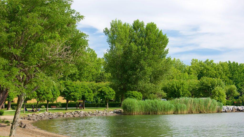 Lago de Bolsena mostrando un lago o abrevadero