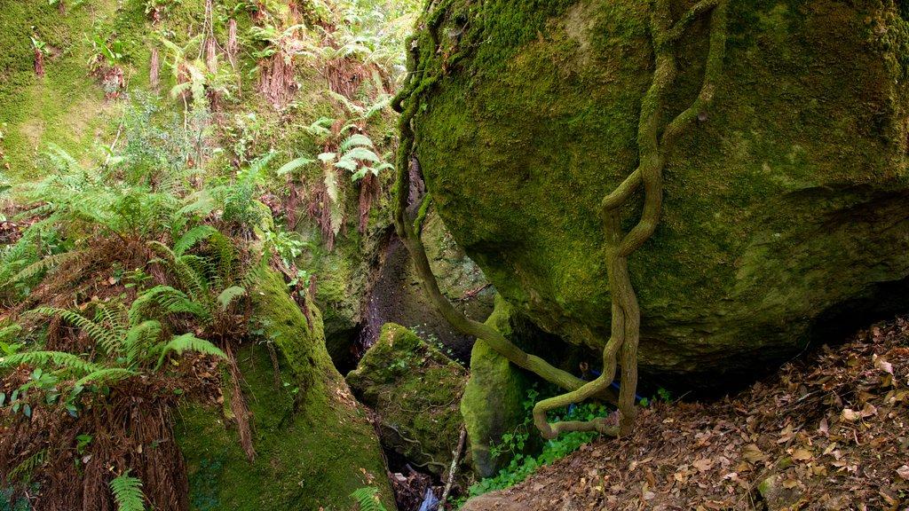 Parco dei Mostri which includes rainforest