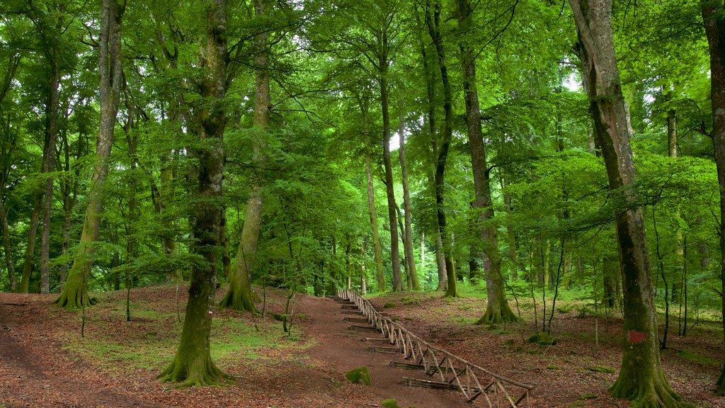Soriano nel Cimino mostrando bosques
